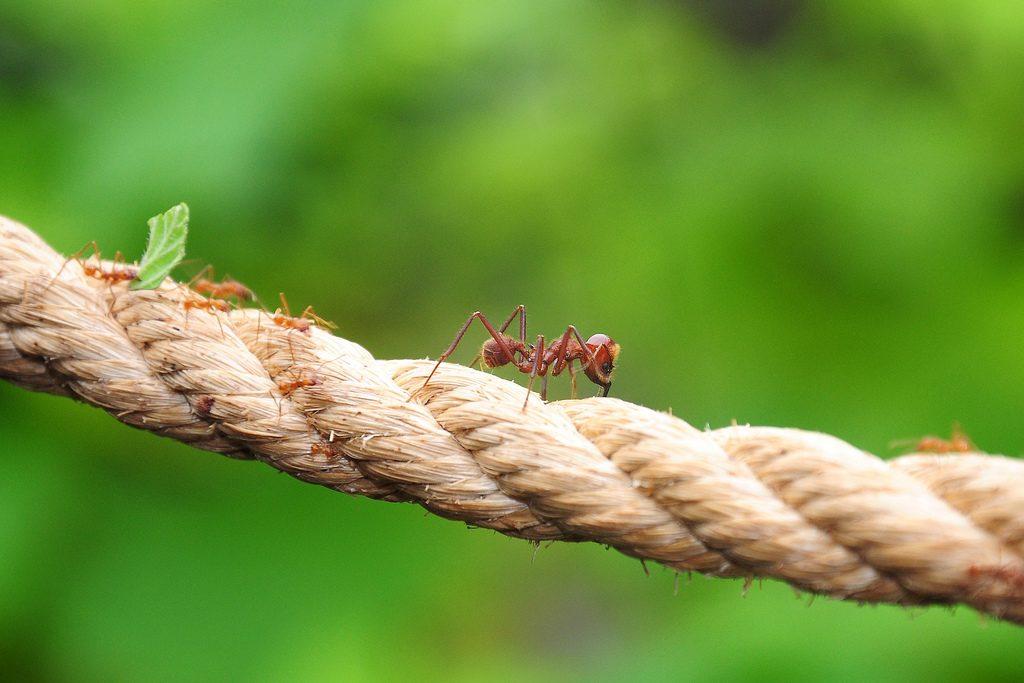 Formigas podem ser habilidosas arquitetas em suas colônias. (Foto: The Lincolnshire Butterfly and Wildlife Park/Flickr-CC)