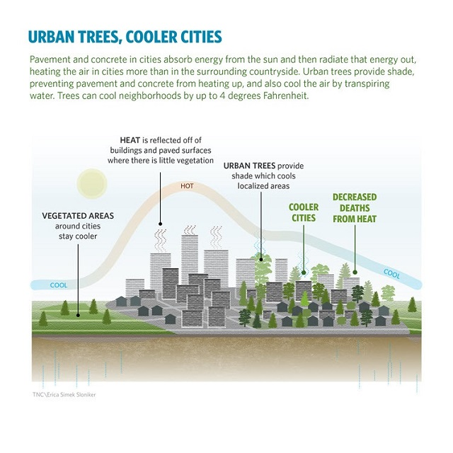 TNC-cooler-cities