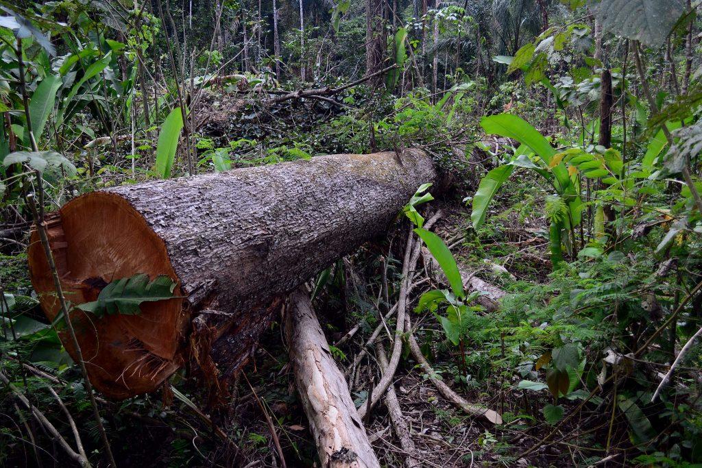 Floresta Nacional do Jamanxim em Novo Progresso, Pará. (Foto: Vinícius Mendonça - Ascom/Ibama/Flickr-CC)