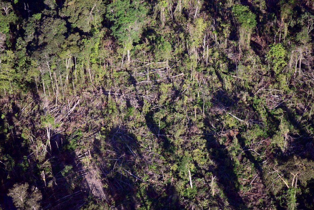 Compromisso do plano poderá disseminar mais informações sobre questões ambientais. (Foto: Vinícius Mendonça-Ascom/Ibama/Flickr-CC)